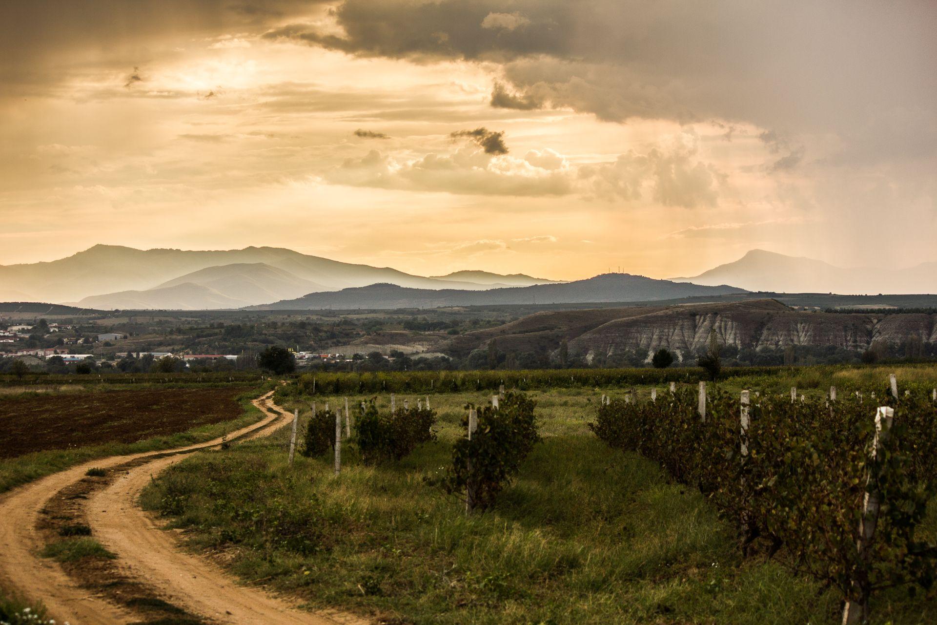 Wein wächst an den schönsten Ecken der Welt